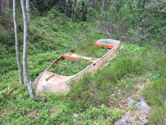 Fra en skog i Kragerø...